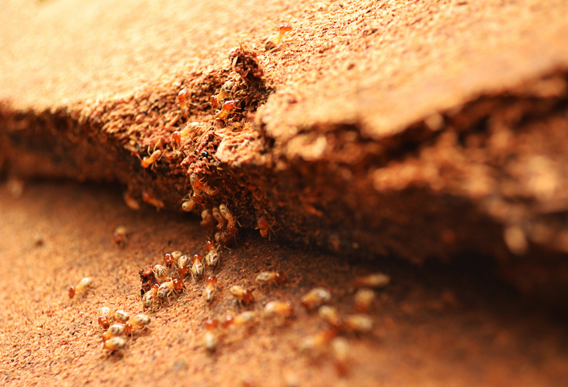 traitement curatif et pr ventif contre les termites cahors. Black Bedroom Furniture Sets. Home Design Ideas